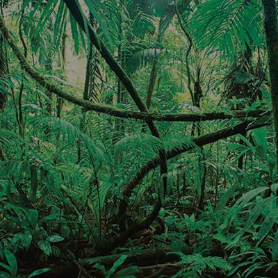 Jungle Congo